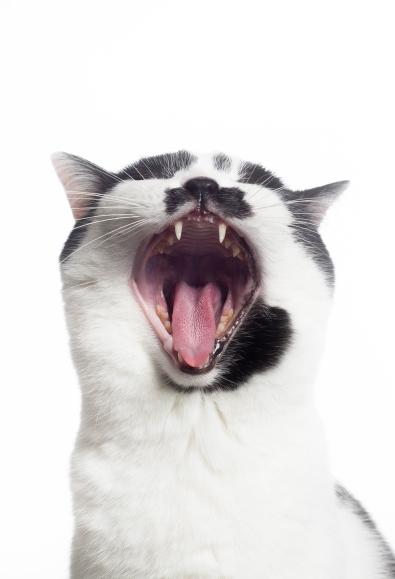 fotografování mazlíčků praha kočička