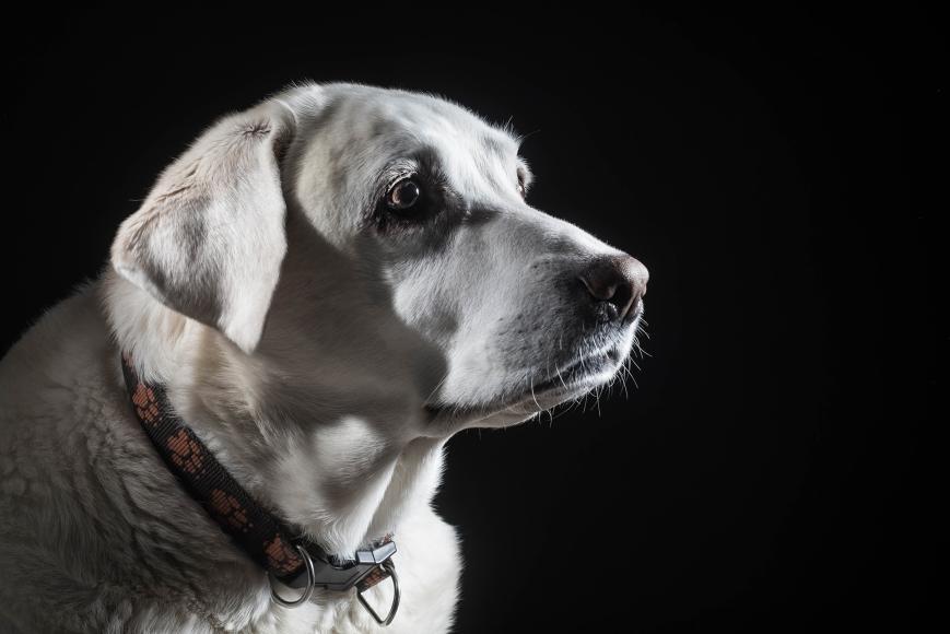 fotografování mazlíčků praha pes